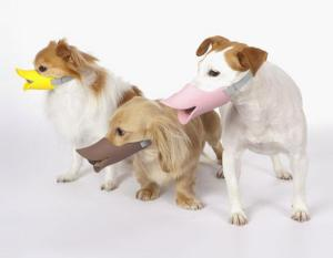 Because if you have to muzzle your dog, you might as well get a laugh out of it.