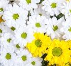 blooming-510519_1280