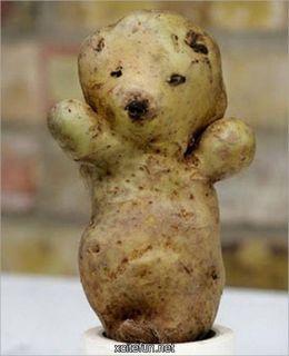 bear potato