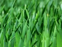 grass-383284_1280