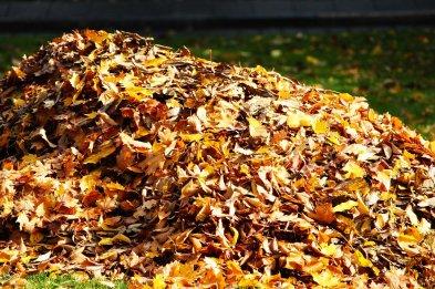 fall-foliage-4578752_1280